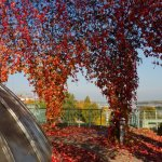 Koepel met rode herfstbladeren