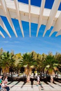 Palmbomen naast de dijk van Málaga