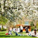 Mensen op een grasveld in een park in Londen