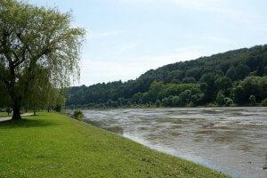 Boom en gras naast de Moezel in Luxemburg