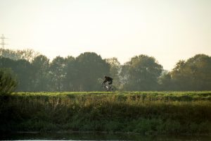 Fietser in landschap rondom Mechelen