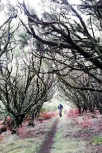 Mountainbiken Madeira