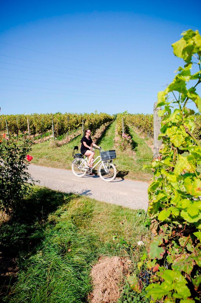Vrouw op een fiets naast wijngaarden