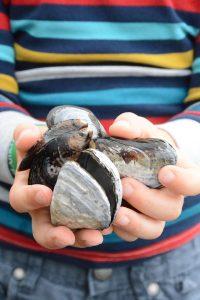 Handen met schelpen