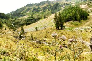 Uitzicht van heuvels, gras en bomen