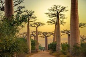 Afrika Madagaskar