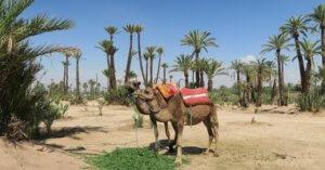 Ourikavallei vanuit Marrakech