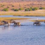 Bestemmingen huwelijksreis Botswana