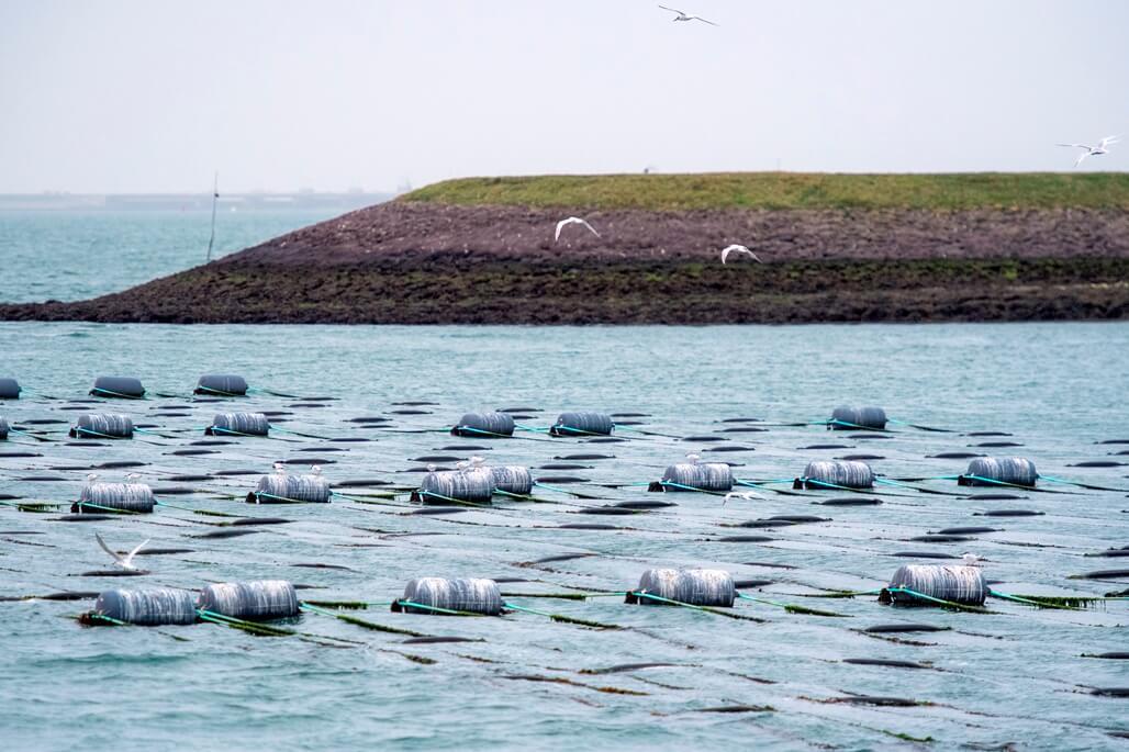 Zierikzee Zeeland boottocht De Onrust