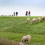Zeeland Zierikzee fietsroute
