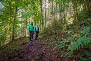 Zwarte Woud: Lotharpfad in Baiersbronn