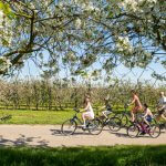 Bloesems tips Haspengouw Limburg fietsen wandelen