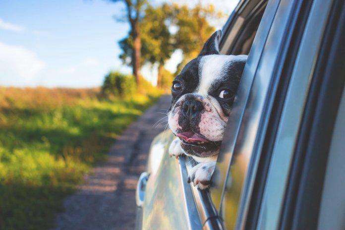 Reizen met je huisdieren: dit zijn de regels