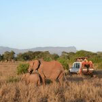 Tsavo East National Park in Kenia © Sofie Roth
