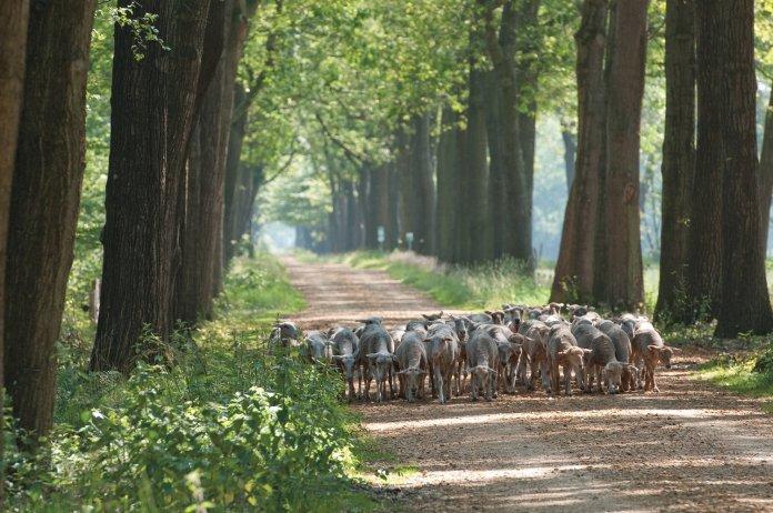 Tips voor uitstapjes in de provincie Antwerpen
