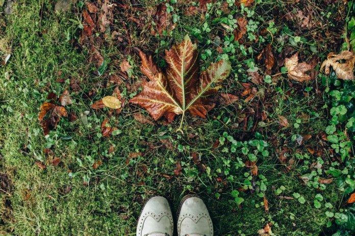 6x een mooie herfstwandeling in eigen land