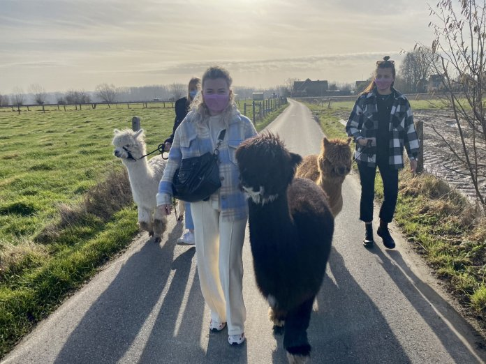 Wandelen met een alpaca