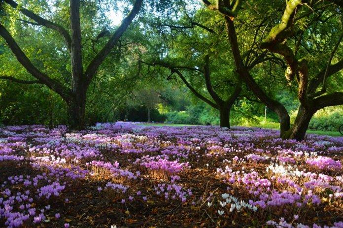 De mooiste arboretums van België