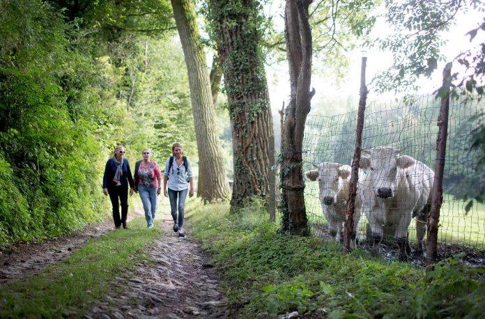 Onze favoriete wandelroutes in Vlaanderen