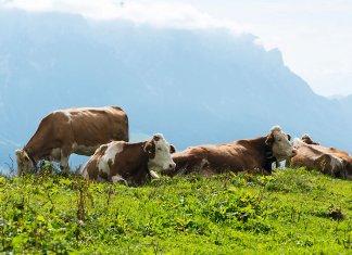 Culinair Tirol: wandelen en proeven